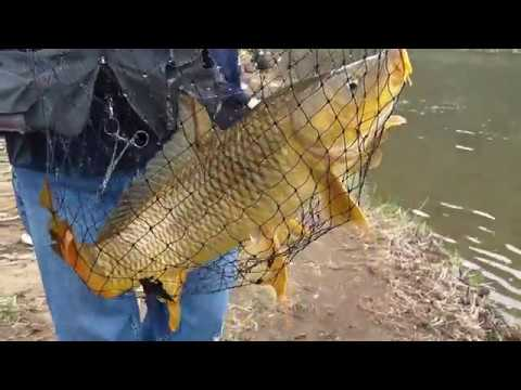 Fishing For Carp & Perch On The Juniata River