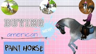 Sso - buying  NEW american PAINT HORSE!!(, 2017-03-08T14:17:16.000Z)