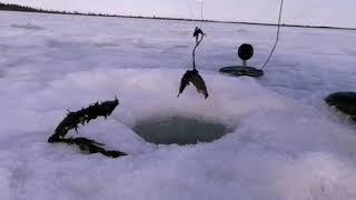 Закрытие сезона рыбалки твердой воды 27 04 2021 01 05 2021