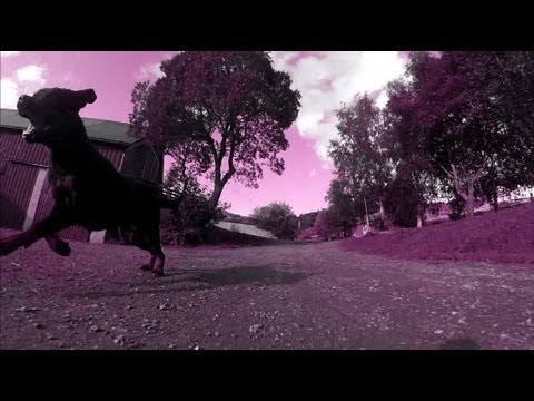 The Rottweiler Workout