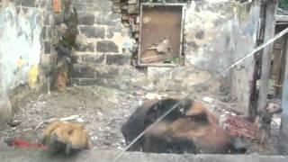 Towarzystwo Opieki Nad Zwierzętami o/w Tarnowie - materiał z interwencji w Oleśnie 2010r.MOV