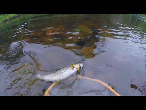 Ловля ручьевой форели на лесной реке спиннингом на воблеры