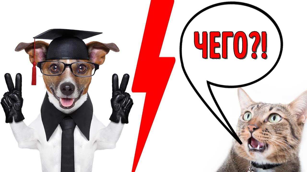 Новое Исследование Показало, Что Собаки Умнее Котов