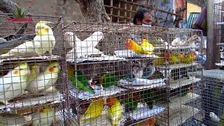 CURRENT EXOTIC BIRD PRICE UPDATE   GALIFF STREET BIRD MARKET KOLKATA INDIA 10TH JAN 2021VISIT PART 2