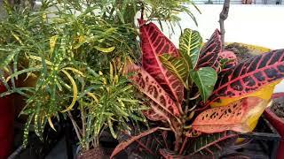 पौधों की पत्तियां क्यों सूखती हैं, पत्तियों को सूखने से कैसे बचाएं,anvesha,s creativity