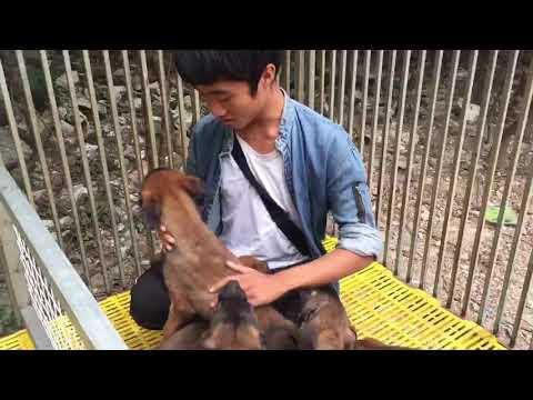 Bán cho becgie bỉ tại tp.Hồ Chí Minh đàn 2 tháng tuổi