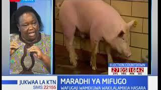 Wafugaji walalama kuhusu ugonjwa wa mifugo wa miguu na mdomo: Jukwaa la KTN pt 2 thumbnail