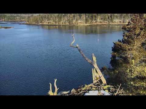 Audubon Osprey Nest Cam 03-18-2018 04:55:47 - 05:55:48