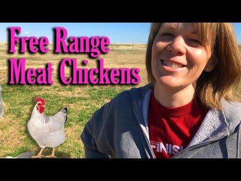 Free Range Meat Chickens (Cornish Cross)