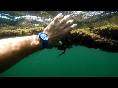 Baba videos : Snorkeling in Malabo, Africa, Gopro