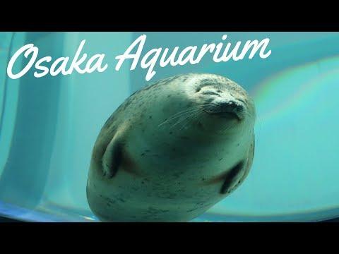 Osaka Aquarium, Tempozan Park & Pokémon Go!
