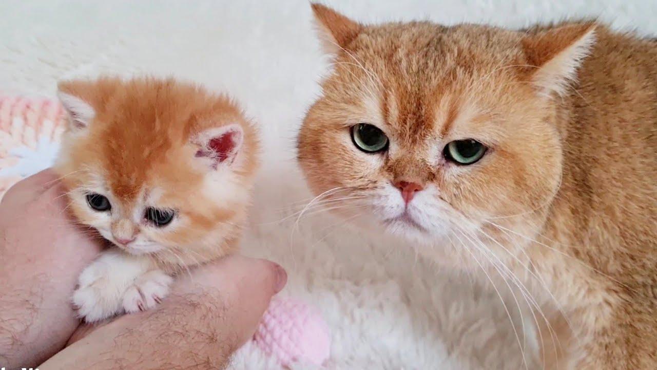 Cat William meets with grandson Solomon 🥰