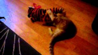 Kot Maciej i jego tygrys