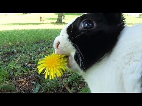rabbit-super-mario-bros-star