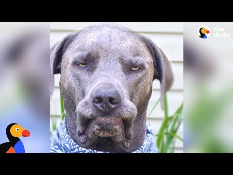 download Girl with Nine Rescue Dogs Loves Her Grumpy Faced Boy The Most | The Dodo