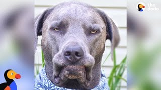 Girl with Nine Rescue Dogs Loves Her Grumpy Faced Boy The Most | The Dodo