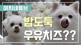 밥도둑 치즈 간식 / 간단한 강아지 간식 만들기