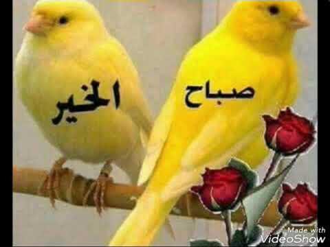 صباح الحب والعشق حبيبي صباح الخير Youtube