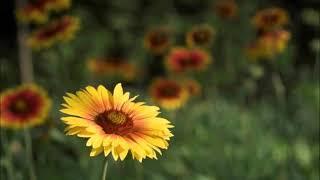 NERDHEAD - キミアイ feat.MAYNARD PLANT(blanc. / MONKEY MAJIK)