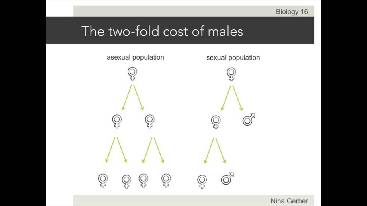 Two fold cost of sex foto 49