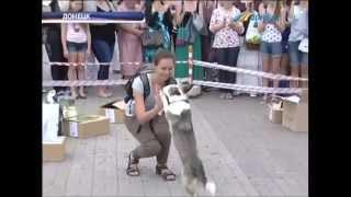 ТК Донбасс - Выставка беспородных собак на пл. Ленина