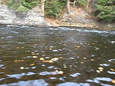Salmon river ny steelhead fly fishing youtube for Salmon river ny fishing