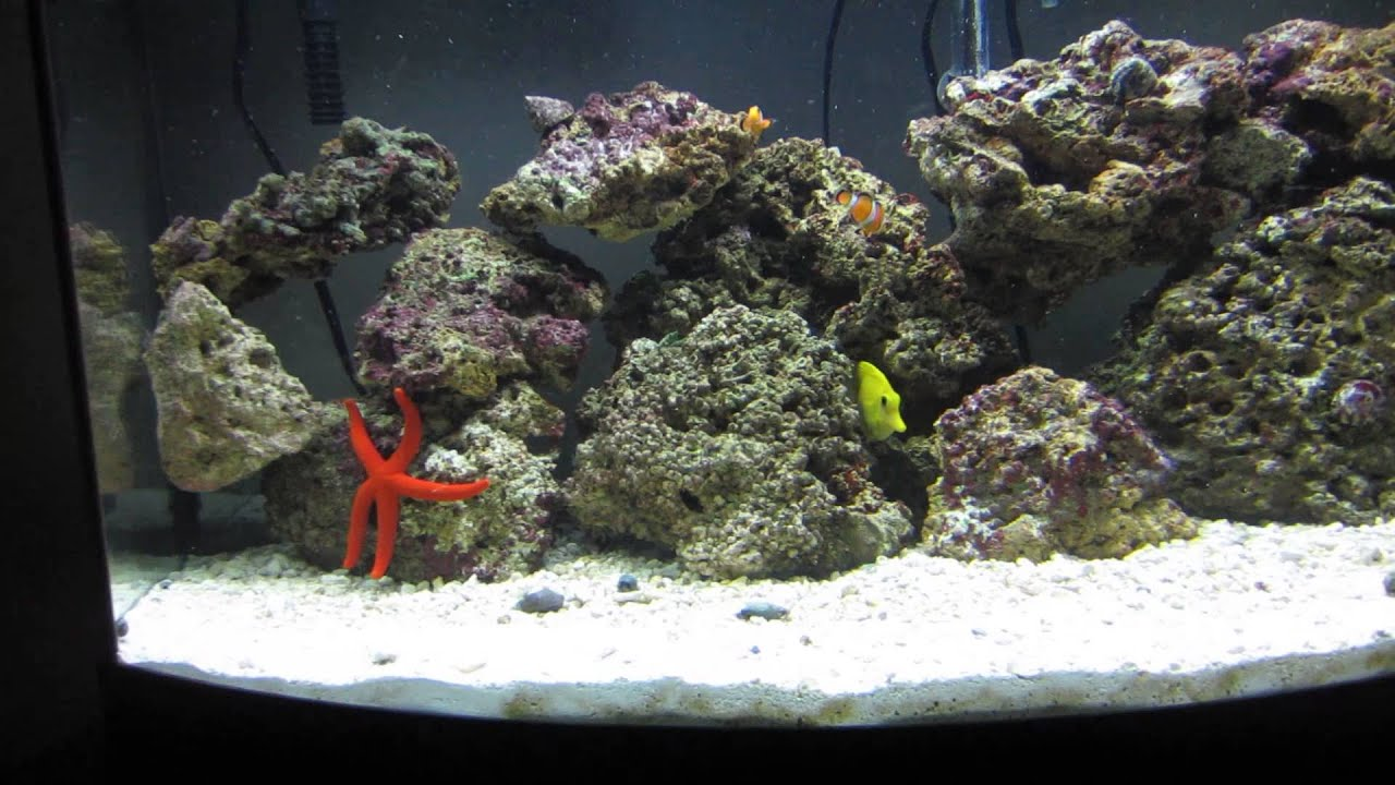 Saltwater fish 36 gallon tank how the 36 gallon bow for Bow front fish tank