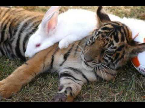 Resultado de imagen de la liebre y el tigre