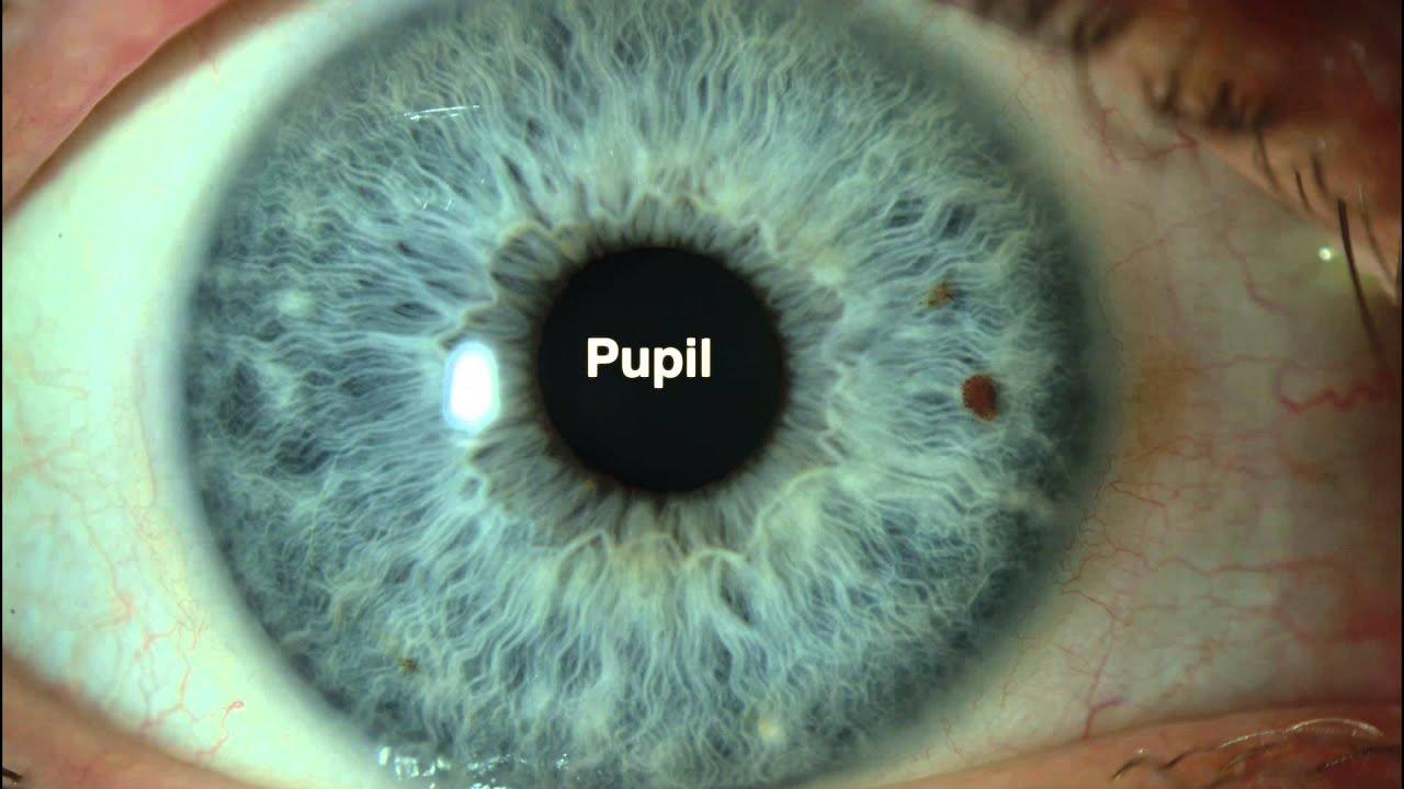Anatomia del ojo - Centro de Oftalmología Bonafonte - YouTube