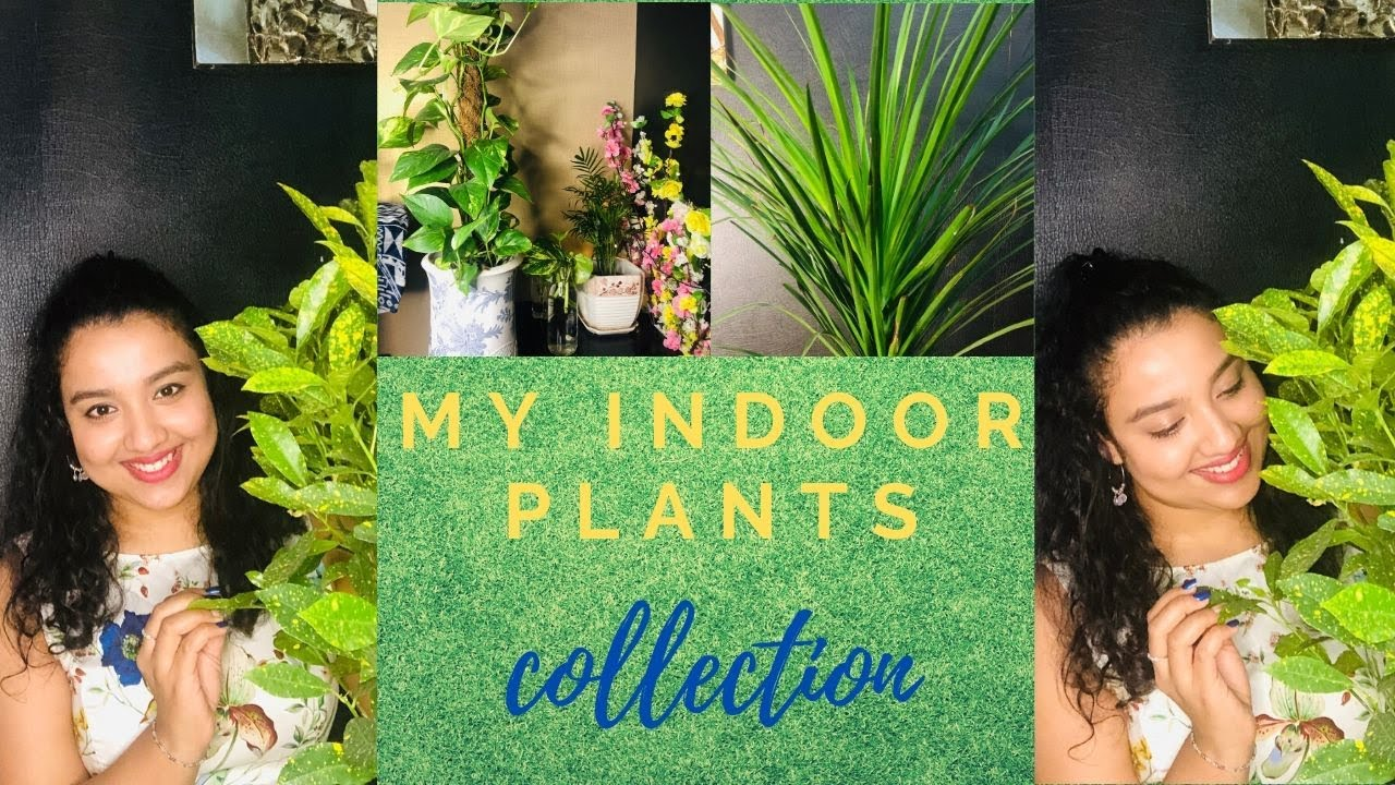 My Indoor plant collection| Plant Tour| Best indoor plants| Home Decoration| SIMPLY BLESSED|