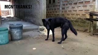 "BLACK DOG#BLACK""DOG$! 2018"