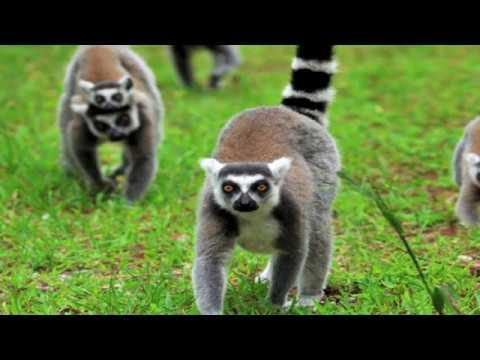 "Michael Platt, ""The Evolution of Visual Decision Making in Primates"""