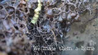 Australian Stingless Bees - Making A Hive