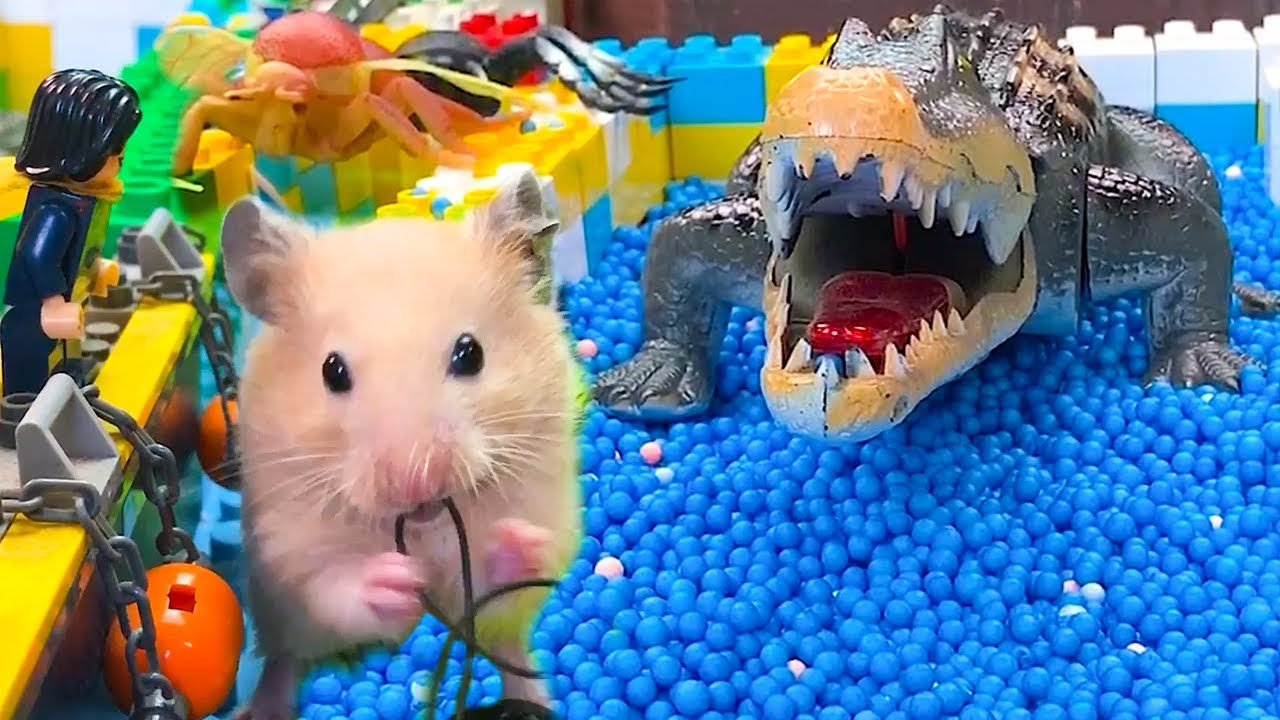 🐹Crocodile Hamster Maze with Traps 😱[OBSTACLE COURSE]😱