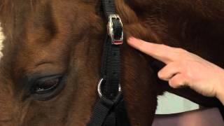 6 : l'articulation temporo-mandibulaire et l'artère transverse de la face