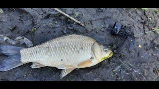 Рыбалка на карася в мае Рыбалка на реке Ингул Каравелово Коларово Ловля карася на фидер весной