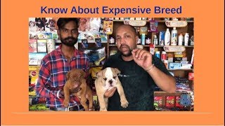 Pet Care - Know About Expensive Breed - Bhola Shola