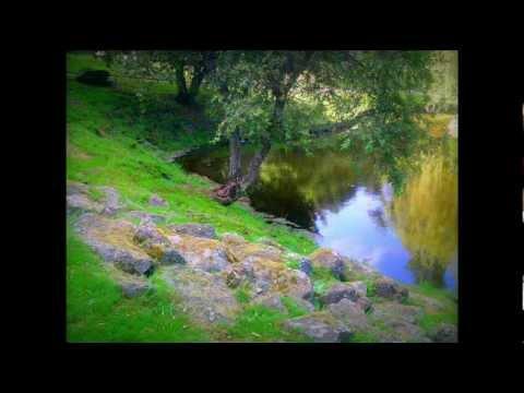 musique relaxation forets nature liberte reposante calmante
