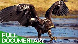Wild Germany: The Mecklenburg Lake Plateau | Free Documentary Nature