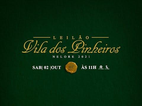 Lote 37   Abelha FIV da Sabiá   SAB B5012 Copy
