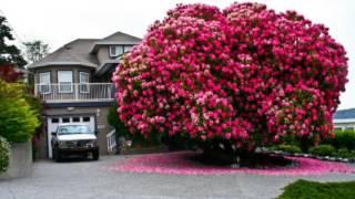 Самые красивые деревья.