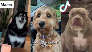 BEST DOG TIKTOKS!! #16