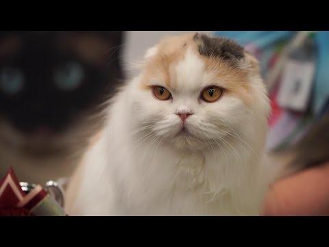 Питомник мейн-кун, купить котёнка мейн кун, фото, порода