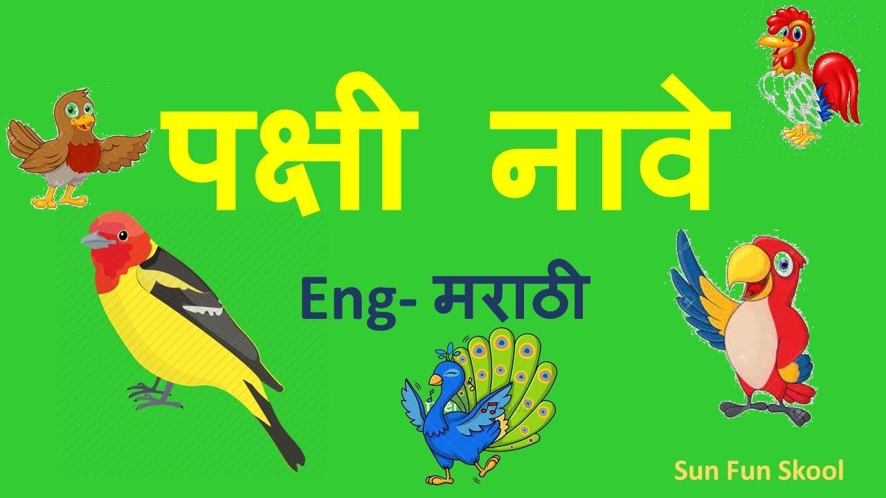 Birds Names In English And Marathi पक ष य च न व Learning Birds Name In Marathi Sunfunskool Youtube