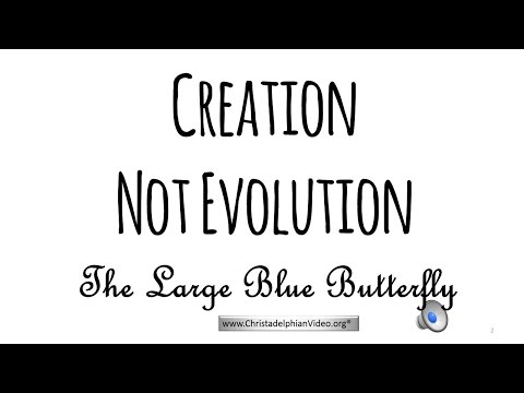 Proof Of Creation: 'The Large Blue Butterfly'