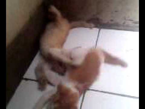 kucing vs kucing Travel Video