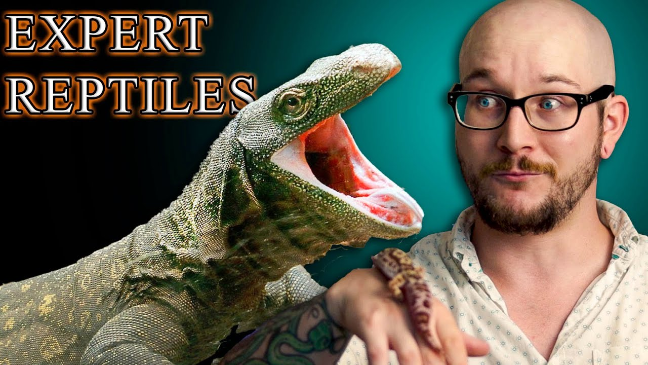 Top 5 Best Reptiles For EXPERT Keepers