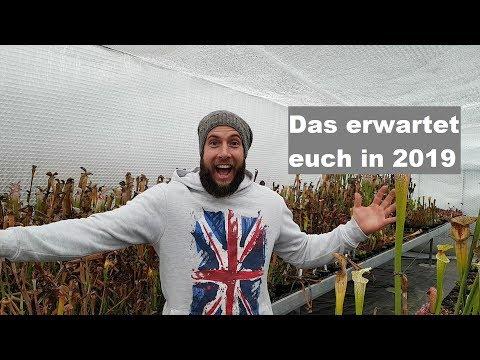 #35-jahresausblick-2019-das-wird-das-neue-karnivoren-jahr-|-fleischfressende-pflanzen-|-green-jaws