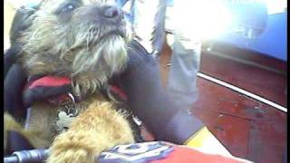Sunderland Rnli Rescue Motor Vessel And A Delightful Dog