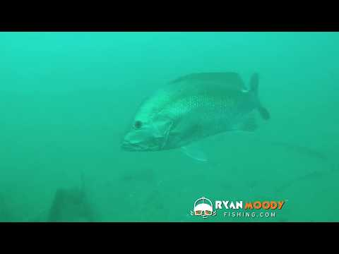 How To Find Big Fish Using Your Fish Finder Sonar